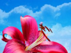 Flowers. Magic Touch Wallpaper 1.0.6 Screenshot