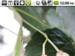 Foraging Flashcards Fruits 1.1 Screenshot