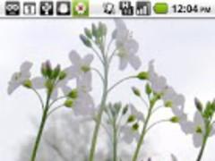 Foraging Flashcards: Spring 1.1 Screenshot