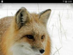 Foxes Live Wallpaper 3.6.0.0 Screenshot