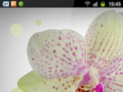 Free Mini LWP Style 1.0 Screenshot