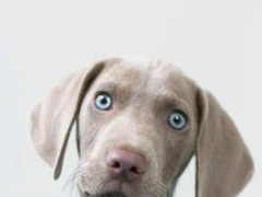Free Puppy Pics 1.00 Screenshot