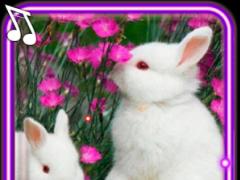 Funny Bunnies live wallpaper 1.5 Screenshot