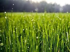 Galaxy S4 Green Grass 1.0 Screenshot