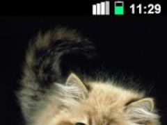 Ginger Cat Cute Wallpaper 1.0.9 Screenshot
