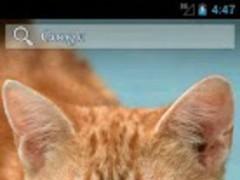 Ginger Cat HD. Live wallpaper. 1.0 Screenshot