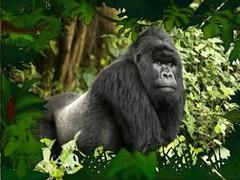 Gorilla 1.0 Screenshot