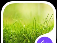 Grass-APUS Launcher theme 502 Screenshot