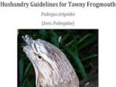 Guidelines for Tawny Frogmouth 0.21.13286.83697 Screenshot