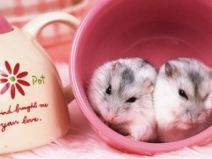 Hamster Puzzle Jigsaw for Kids 1.0 Screenshot