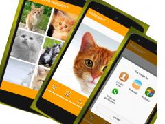 HD Cat Wallpapers 1.0 Screenshot