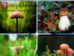 HD HQ Mushroom Wallpapers 2.2 Screenshot
