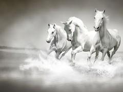 Horse Horses Live WALLPAPER 1.0 Screenshot