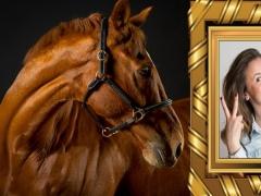 Horses Photo Frames 1.2 Screenshot