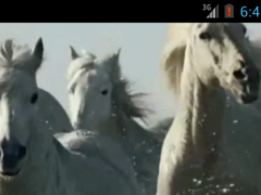 Horses video live wallpaper HD 3.0 Screenshot