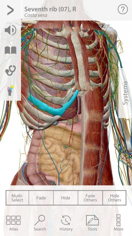 Results For Free Download Visible Body 3d Human Anatomy Atlas For