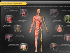 Human Anatomy Explorer - Digestive System 1.1.3 Screenshot