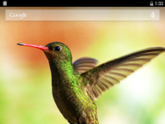 Hummingbirds Live Wallpaper 3.6.0.0 Screenshot