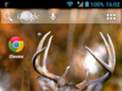 Hunting Deer Live Wallpaper 1.0.0 Free