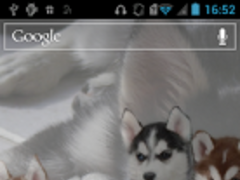 Husky HD Live Wallpaper 1.0 Screenshot