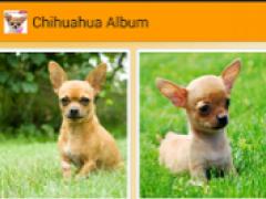 I Love Chihuahua 2.3.5 Screenshot
