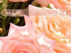 icon & wallpaper-Pink Roses- 1.0.0 Screenshot