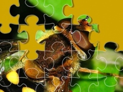 Insect Life Jigsaw Puzzle Game 1.0 Screenshot