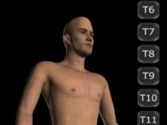 Interactive 3D Dermatomes 1.2 Screenshot