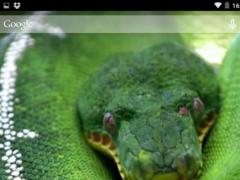Jungle snake 2.0 Screenshot