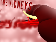 Kidney 3D 1.0 Screenshot