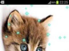 KITTEN & PUPPY PRO WALLPAPER 1.1.0A Screenshot