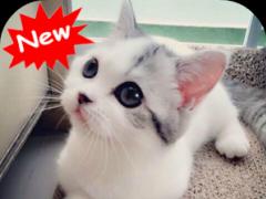 Kitten 1.1 Screenshot