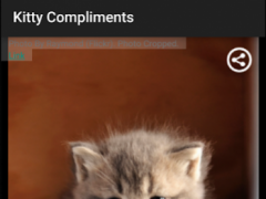Kitty Compliments 1.4 Screenshot