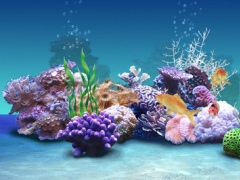 Koi Aqua HD - Real Sim Coral Reef Plants and Live Freshwater Fish Tank Pond & Virtual Tropical Fishes Tour 1.1 Screenshot