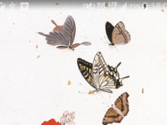 Korea Butterfly Wallpaper 1.0 Screenshot