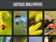 Ladybug Wallpapers 1.0 Screenshot