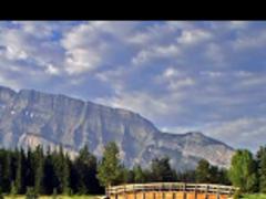 Lake of Koi Live Wallpaper 2 Screenshot