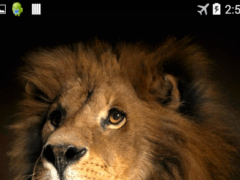 Lion 3d Live Wallpaper 2 0 Free Download
