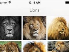 Lions Wallpapers 1.0 Screenshot