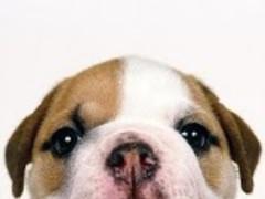 Little Dogs Wallpaper 7.5 Screenshot