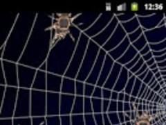 Live Spider 1.0 Screenshot