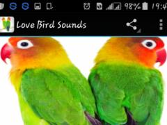 bird ringtone download notification