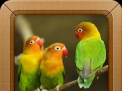 ringtone bird sound music