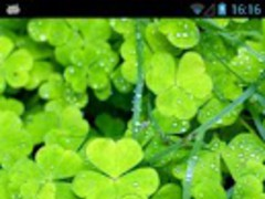 Lucky Clover Live Wallpaper 1.0 Screenshot