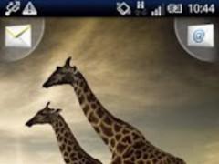 Magic Effect : Giraffes FREE 1.3 Screenshot