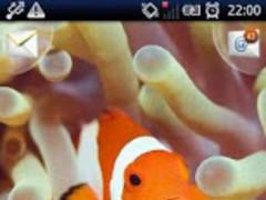 MagicEffect: Clown Fish 1.5 Screenshot
