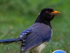 mobile ringtone bird sound