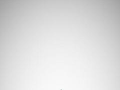 Maier & Associates 4.1 Screenshot