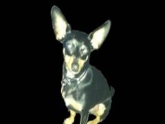 Make Your Dog Howl 0.0.1 Screenshot
