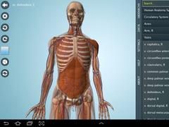 Male Anatomy 3D - Anatronica 2.07 Screenshot